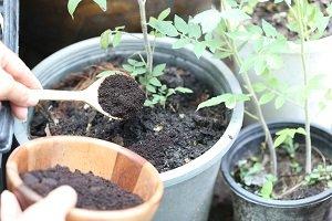 Eine Pflanze wird gedüngt.