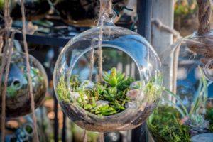 kakteen und sukkulenten in einem offenen glas