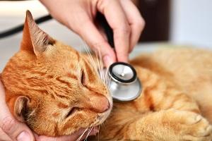 Katze beim Tierarzt.