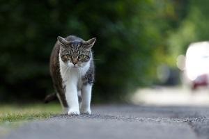 Katze hat Freigang.
