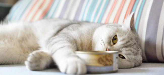 Wenn die Katze nicht frisst: Ursachen und Möglichkeiten den Appetit anzuregen