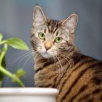 Katze sitzt neben einer Pflanze.