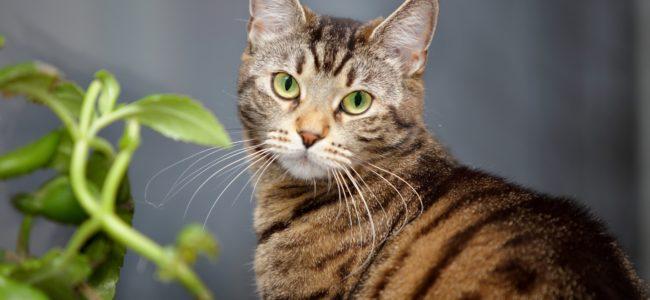 Giftige Pflanzen für Katzen: Vermeiden Sie diese Pflanzen in Haus, Garten oder Wohnung