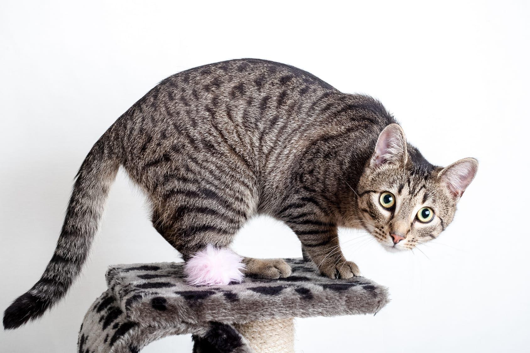So trainieren Sie Ihre Katze – Tipps & Tricks!