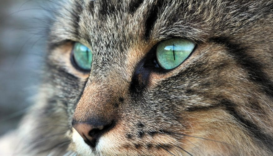 Können Katzen im Dunkeln gut sehen?