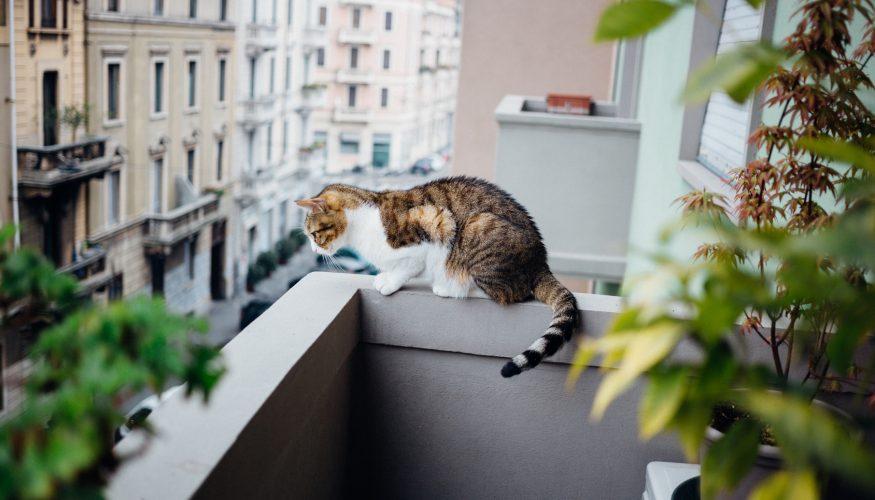 Katzen landen immer auf den Füßen – Stimmt's?