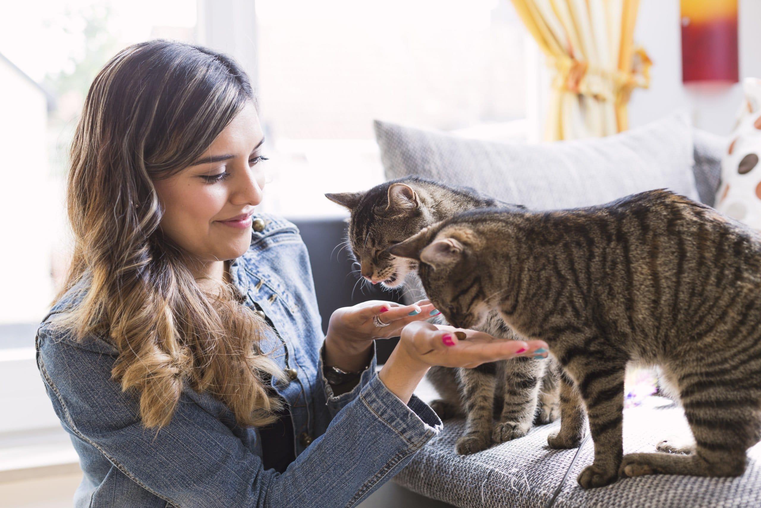 frau fuettert katzen mit trockenfutter