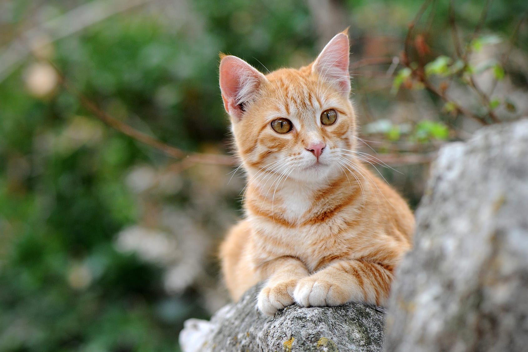 Katzen vertreiben – 7 Tipps & Tricks