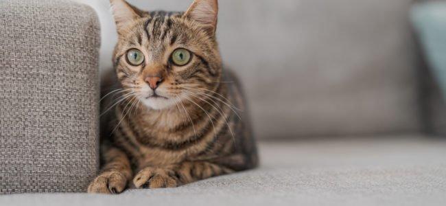 Katzenhaare entfernen: Tipps gegen Tierhaare in Wohnung, Waschmaschine und Textilien