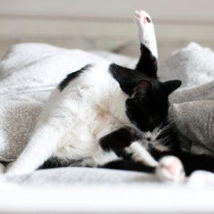 katze auf dem bett