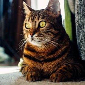remove cat hair from clothes and home