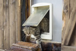 Katzenklappe Vergleich Test
