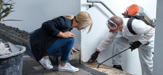 Kellerasseln bekämpfen: So werden Sie die ungebetenen Besucher wieder los