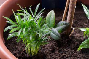 pflanztopf mit mehreren pflanzen