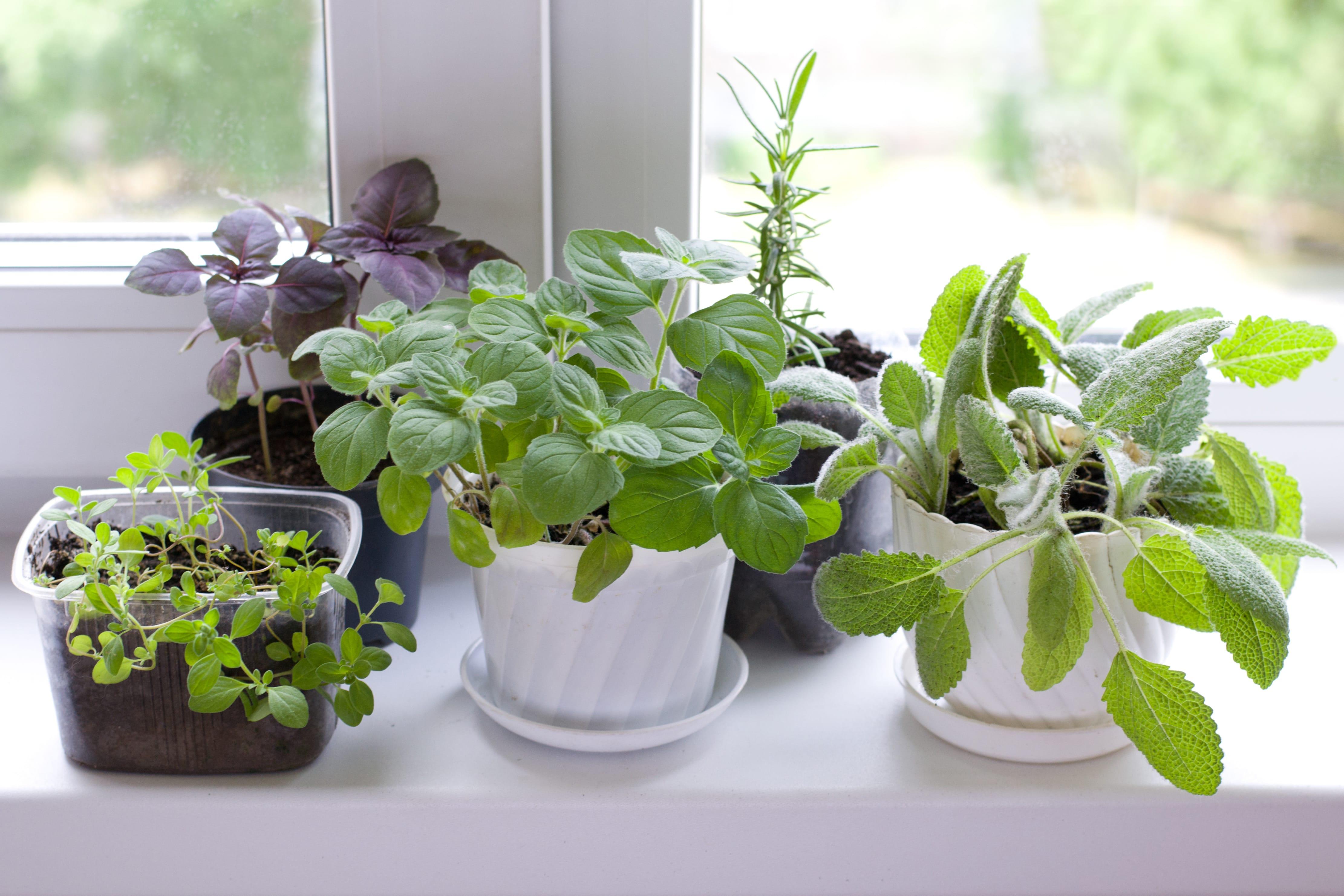 Kräuter von der Fensterbank – 2 Tipps