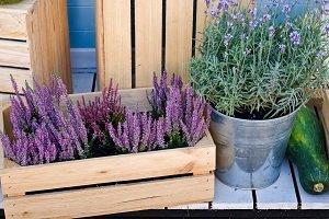 Lavendel in einer Holzkiste.