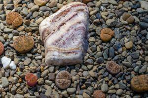 lebende und tote steine nebeneinander