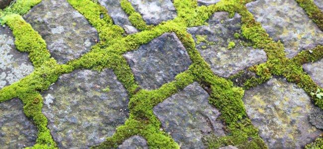 Moos entfernen: Mit diesen Mitteln Moos zuverlässig und langanhaltend vernichten