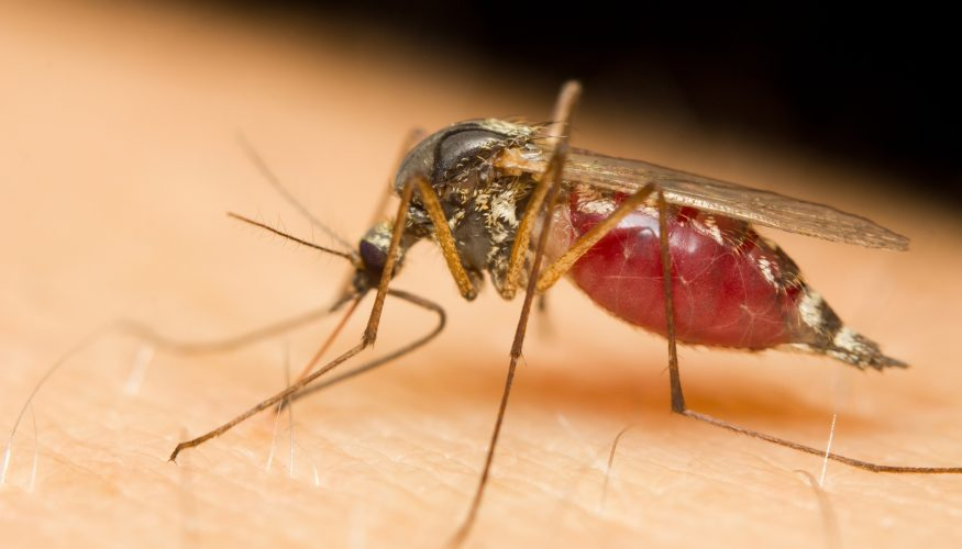 Mücken vertreiben – 6 Hausmittel