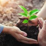 pflanze wird im garten neu gepflanzt