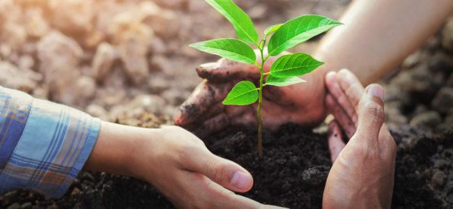 Nachhaltig leben: Tipps & Ideen für den Alltag
