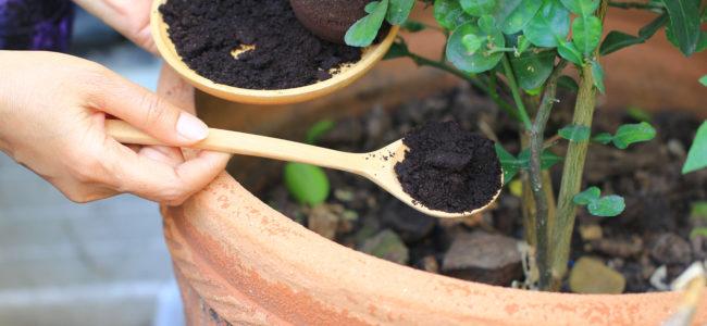 Natürlicher Dünger: Mit Hausmitteln organisch und nachhaltig düngen