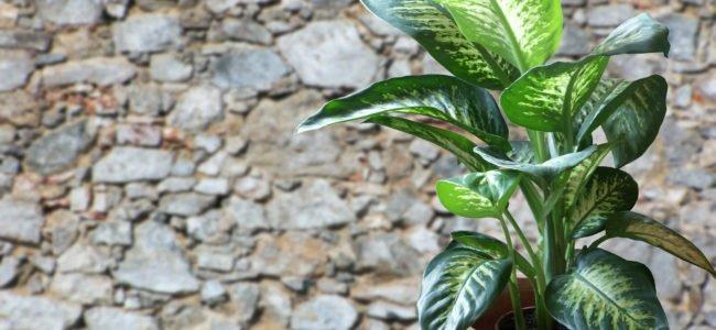 Giftige Zimmerpflanzen: So finden sie geeignete Pflanzen für ihre Wohnung/Haus