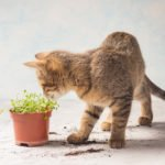 Katze spielt mit Pflanze.