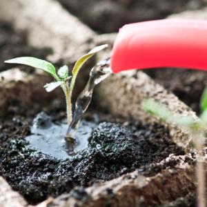 kleine pflanze beim wachsen