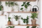 gruene zimmerpflanzen mit giesskanne