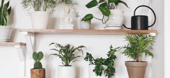Pflanzen gießen: Wann und wie Sie am besten Ihre Pflanzen gießen