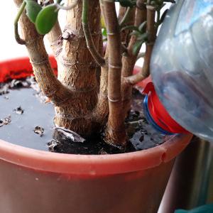 topfpflanze wird gegossen
