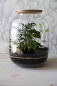 pflanzen in einem geschlossenen glasgefaess