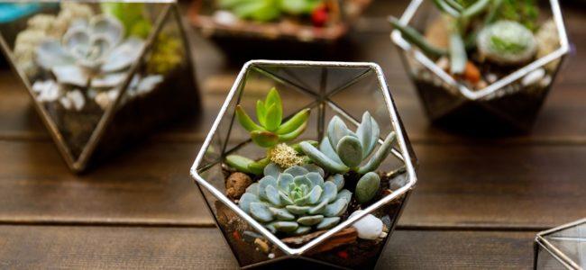 Pflanzen im Glas: Anleitung für Ihr eigenes ewiges Terrarium