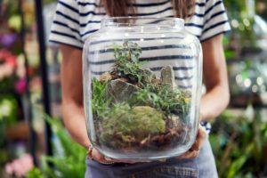 dekorativ aussehende pflanzen im glas
