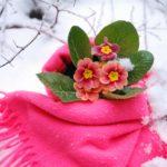 Blume mit Schal im Winter.