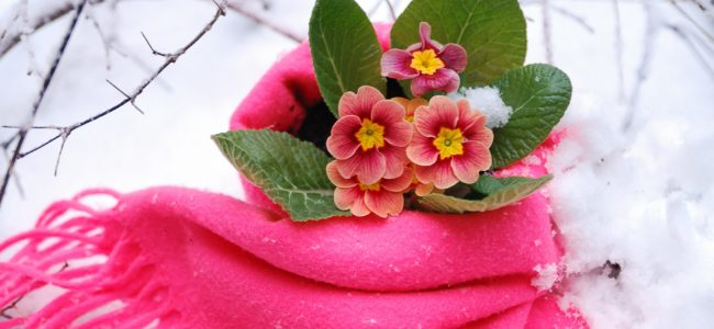Pflanzen überwintern: So bekommen Sie Ihre Pflanzen frostfrei durch die kalte Jahreszeit