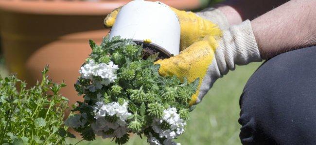 Pflanzen umtopfen: Zeitpunkt, Tipps zur Erde und Anleitung zum Umtopfen