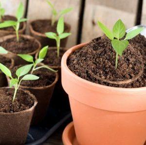junge pflanzen