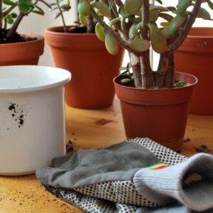 handschuhe, pflanze und topf