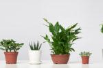 pflanzgefäße für zimmerpflanzen