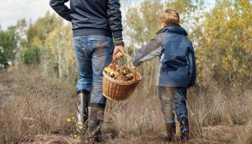 Pilze mit Schwamm – Sind sie essbar?