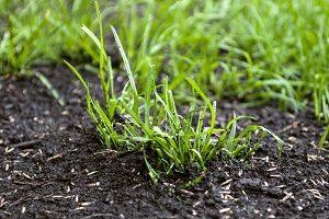 Rasensamen auf dem Boden.