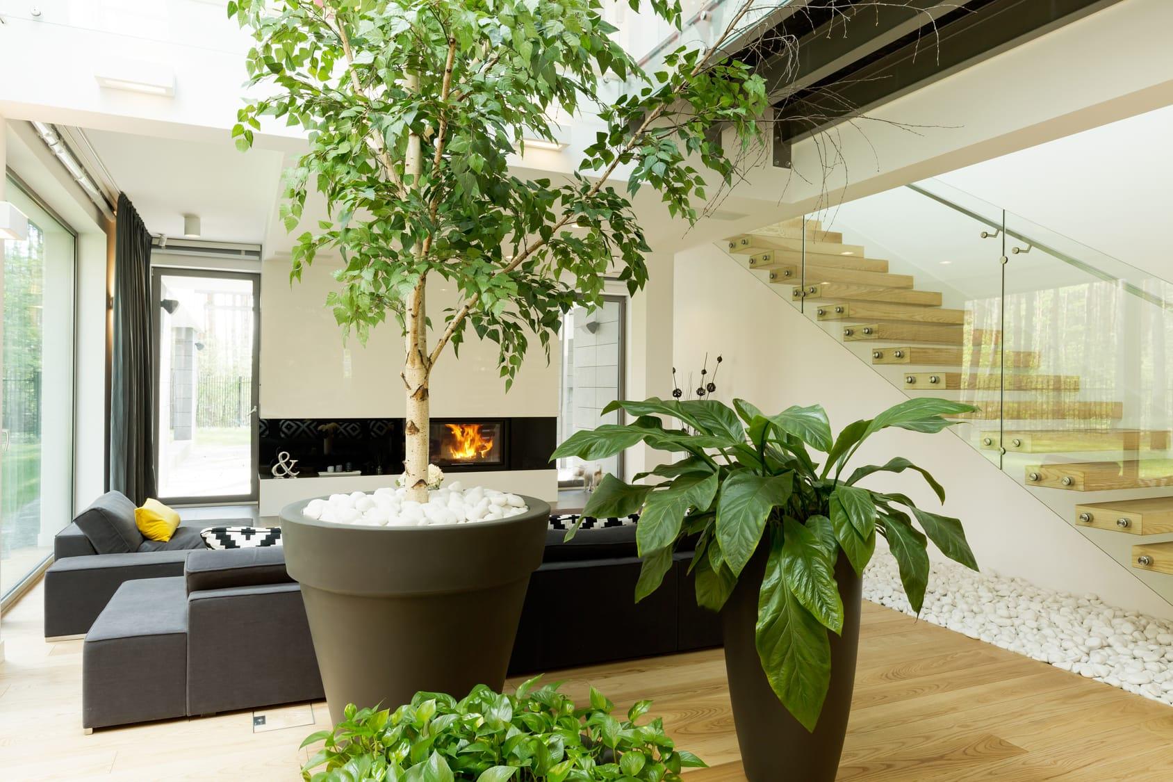 Raumklima verbessern – Mit diesen Pflanzen klappt's