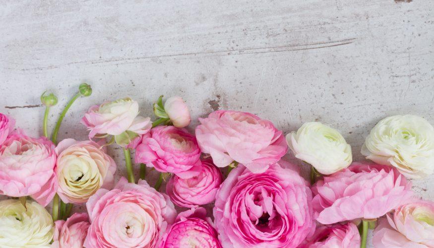 Rosen lange frisch halten – 3 Tipps