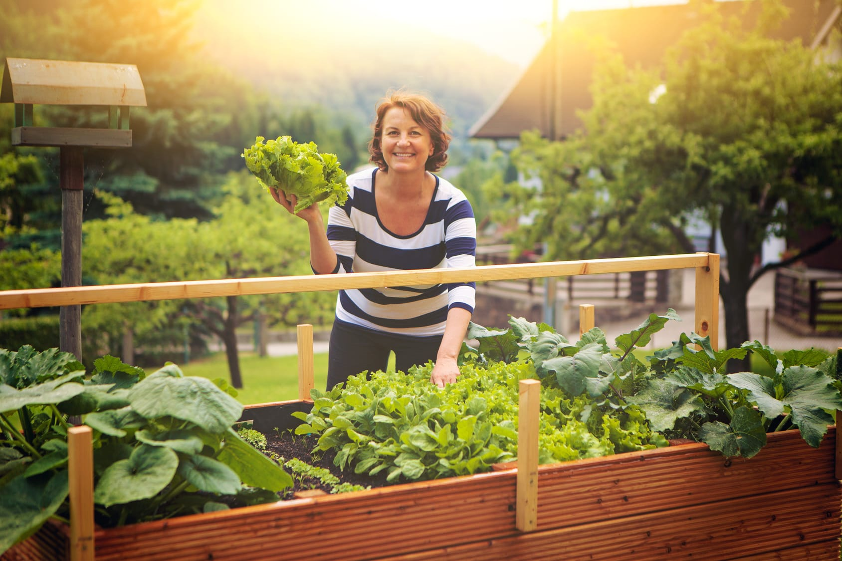 Salat ernten – Morgens oder abends?