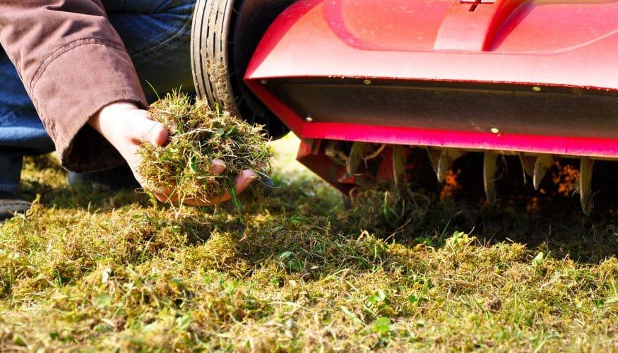 Schimmel im Rasen
