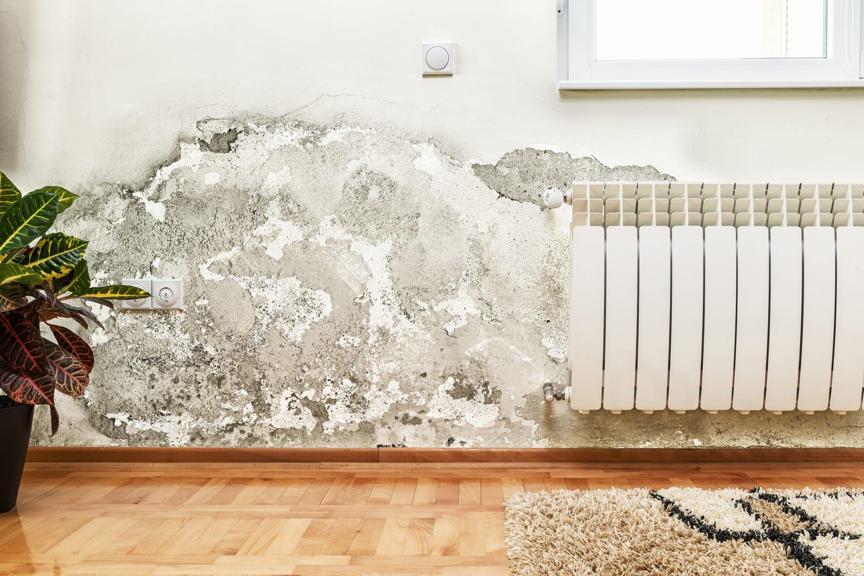 Schimmel In Der Wohnung Beseitigen schimmel entfernen schritt für schritt anleitung haushaltstipps