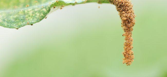 Hausmittel gegen Spinnmilben: Einfach bekämpfen und vorbeugen