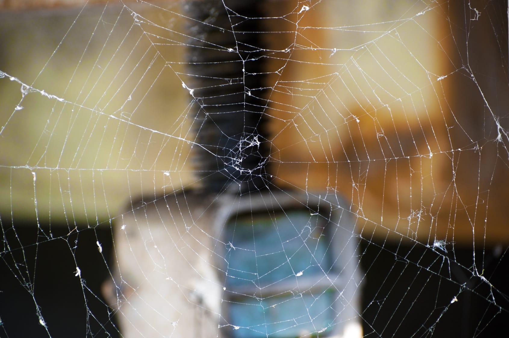 Spinnweben entfernen – 6 Tipps